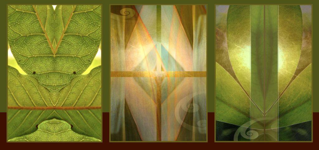 artandhealing-native-trees-rackcard-robertvandertouw-