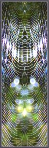 spiderweb 168kb bookmark